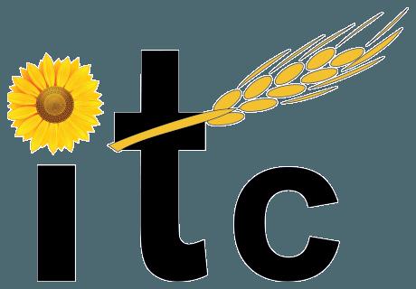 ITCseeds – Producator de Seminte Agricole